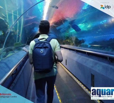 aquaria2